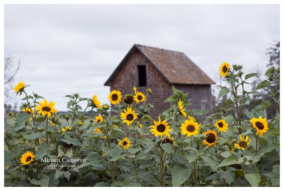 Miriam Cameron Photography - calendar story 8